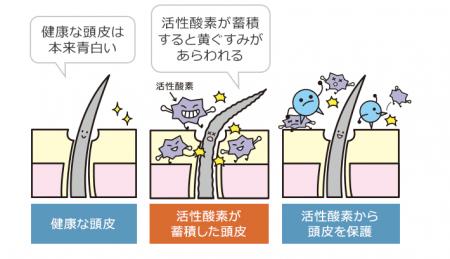 ケアネス資料4
